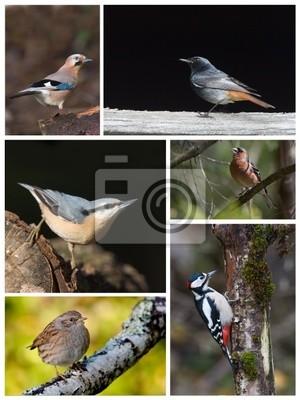 Planche espèces oiseaux