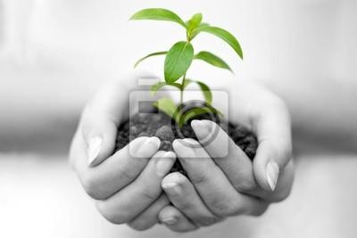 Planta en la mano femenina