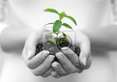 planta en manos femeninas