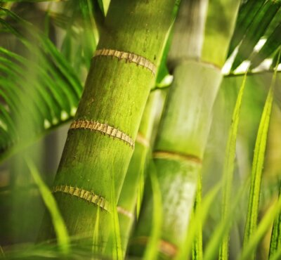 Planta verde de cerca