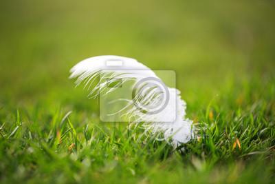 Pluma blanca tendida en el pasto