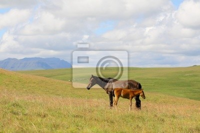 Ponies Maluti