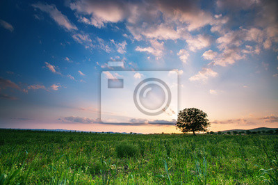 Prado del resorte con el árbol grande