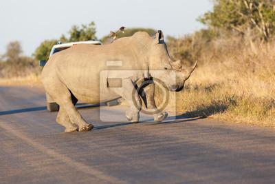 Prancing Rhino