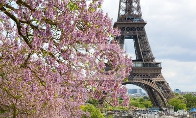 Primavera en París. Jacarandas en flor y la Torre Eiffel