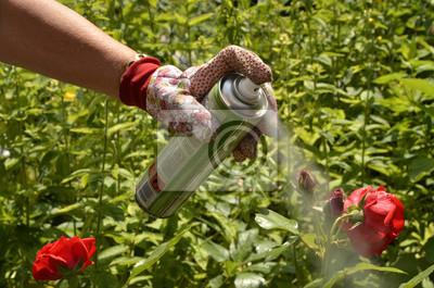 Protección de las plantas contra los áfidos
