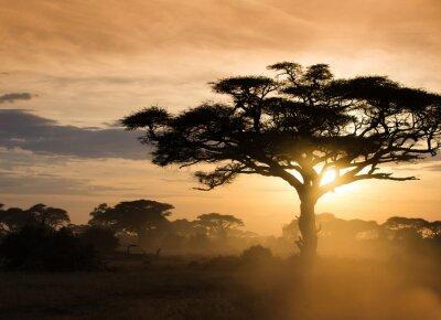 Póster Puesta de sol en la sabana africana