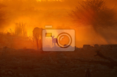 Puesta de sol en Okaukeujo, Namibia