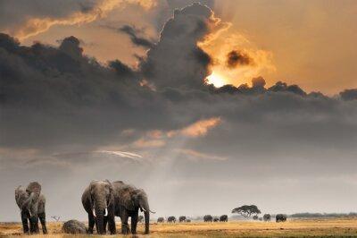 Puesta del sol africana con elefantes