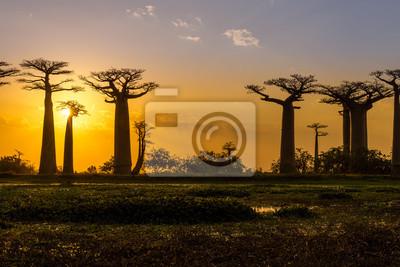 Puesta del sol sobre Baobab avenida