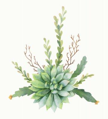 Póster Ramo del vector de la acuarela de cactus y de plantas suculentas aisladas en el fondo blanco.