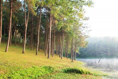 Póster Rayos de sol en Natural Spruce Woodland