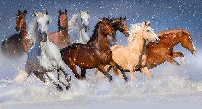 Póster Rebaño de caballos correr rápido en el campo de nieve de invierno