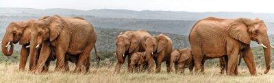 Póster Rebaño de elefantes