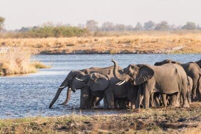 Rebaño de elefantes bebiendo en el río