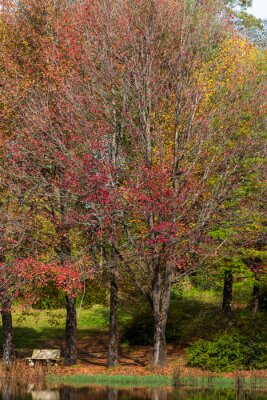 Red and yellow colored autumn leaves in the trees