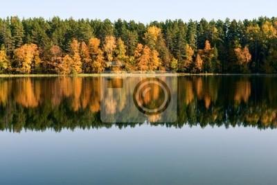 Reflexión del bosque del otoño
