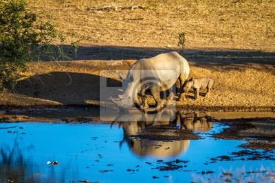Reino y un bebé de agua potable en el norte de Namibia, África