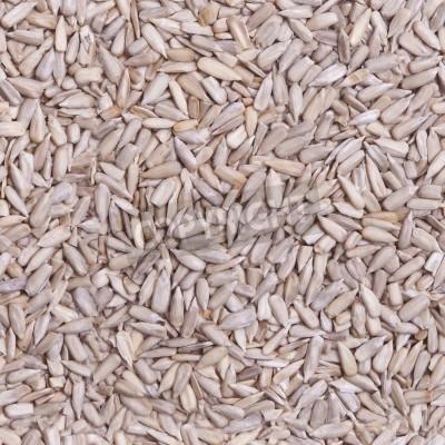 Póster Repitiendo, semillas de girasol tileable wallpaper. Fotografía especialmente diseñado que se repite izquierda, derecha, arriba y abajo