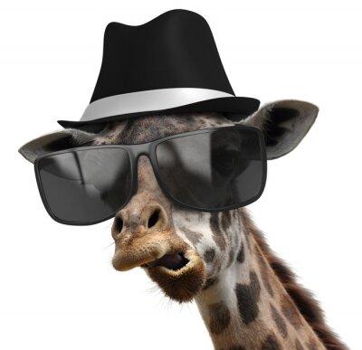 Póster Retrato animal divertido de una jirafa con tonalidades y fedora