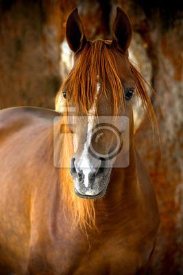 Retrato del caballo en una granja en verano