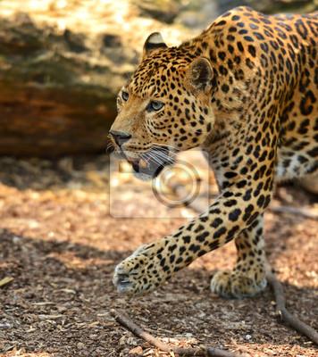 Retrato Leopard