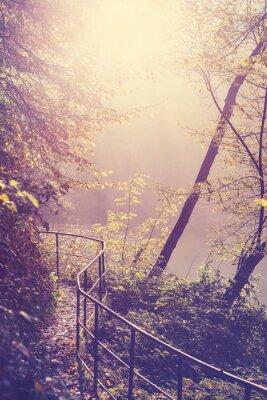 Póster Retro filtrada imagen de un camino en el bosque.