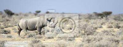 Rinoceronte negro caminando por el veldt