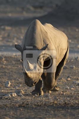 Rinoceronte negro en el parque nacional de Etosha.