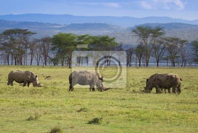 Rinocerontes blancos en el lago nakuru National Park Kenia