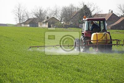 Rociar campo cultivos de trigo con el tractor y el pulverizador