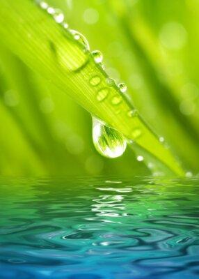 Rocío de la mañana en una hierba verde se refleja en el agua prestados
