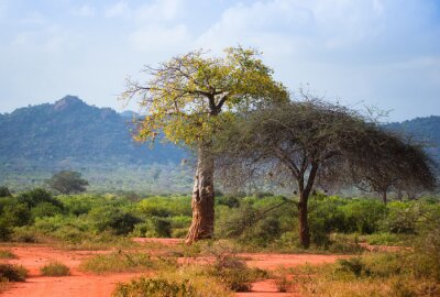 Sabana africana con baobab y acacia