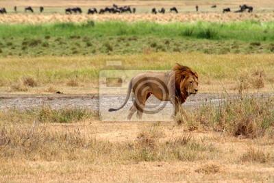 Póster Safari