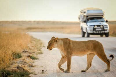 Póster safari africano