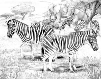 Póster Safari - cebras - Colorear