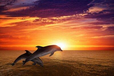 Póster Saltando delfines