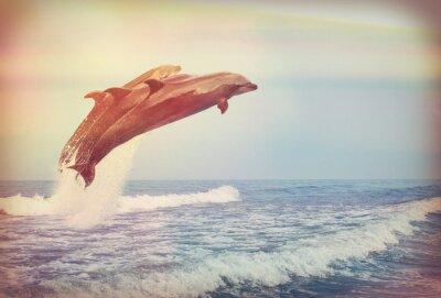 Póster Saltando delfines, instagram