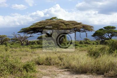Savannah en Kenia