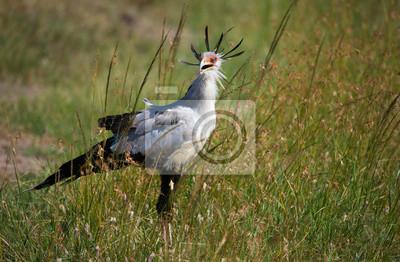 Secretario de aves