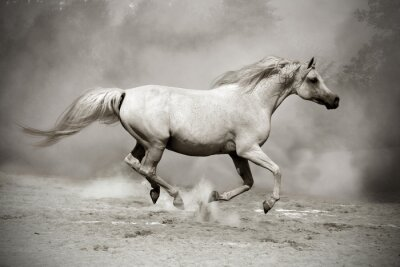 semental blanco-plata en polvo