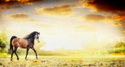 Póster Semental caballo corriendo trote sobre fondo de la naturaleza de otoño, banner