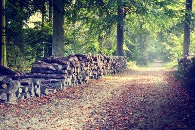 Póster Sendero en el bosque de otoño