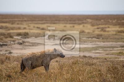Serengeti Hiena