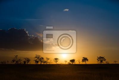 Serengeti, sabana, brumoso, ocaso, luz