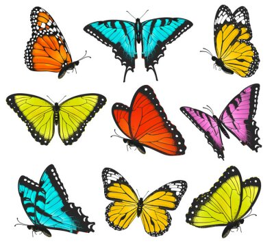 Póster Set of colorful butterflies illustration