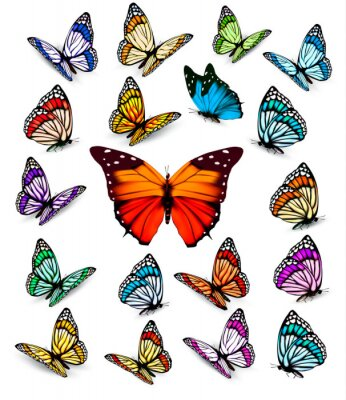 Póster Set of different colorful butterflies. Vector.