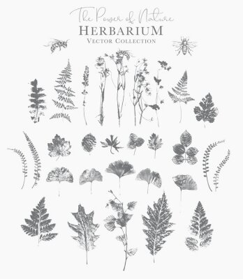 Póster Set of dried herbs and natural plants and bees - herbarium logo collection on white background