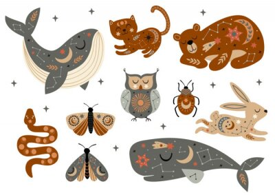 Póster set of isolated celestial animals