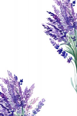 Póster set of lavender flowers elements on an isolated white background, watercolor illustration, hand drawing, greeting card with a place for text
